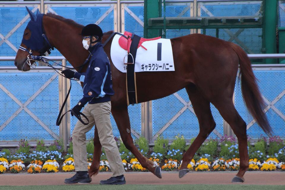 パドックの見方その1:馬のお腹を見る