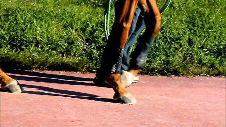 パドックの見方その3:歩き方